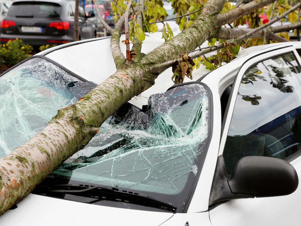 На машину упало дерево